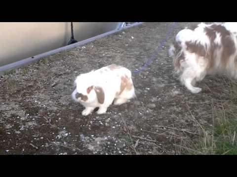 Hond Mirthe en konijn snuffie