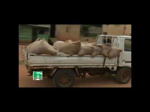 FARMERS MARKET: DWINDLING COCOA FORTUNES PART II