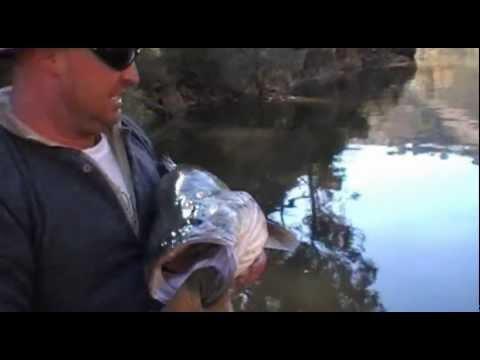 Big Murray Cod, Fair Dinkum Fishing Adventures, Burrinjuck Dam