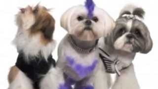 Стрижка собак клиника