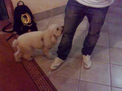 Il cane di Fabio Ciampa
