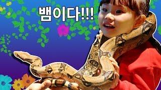뱀이다!!! 라임 뱀 목걸이에 도전하다!! 경주 토이빌리지 방문기 제1탄 동물체험 토끼 도마뱀 친칠라snake  LimeTube & Toy 라임튜브