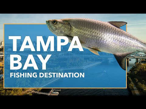 Fishing In Tampa Bay: All You Need To Know | FishingBooker
