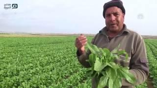 مصر العربية | مبيدات إسرائيلية تقتل محاصيل زراعية بغزة وتكبّد أصحابها الخسائر