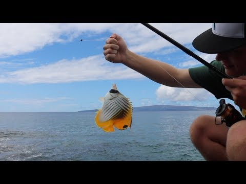 Fishing In Hawaii - Crazy Catches!!