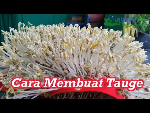 How to Make Mung Bean Sprouts