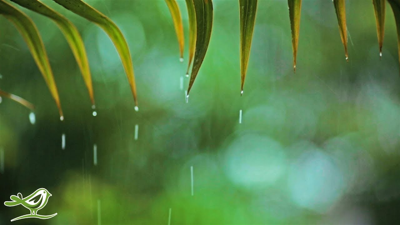 Relaxing Music & Soft Rain Sounds: Relaxing Piano Music, Sleep Music,  Peaceful Music ★148🍀