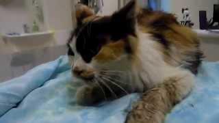 Колобова-кошка,доставили в клинику,опухоль на языке.