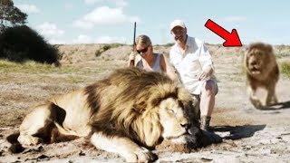 Aslanı Öldürüp Fotoğraf Çekmeye Çalıştılar Fakat 2. Aslanı Fark Ettiklerinde Artık Çok Geçti.