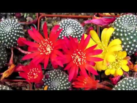 выставка кактусов и других экзотических растений Киев 22 05 18