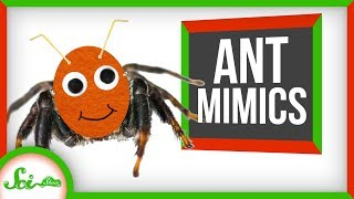Seriously, None of These Are Ants | 8 Ant Mimics