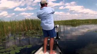 "Bass Fishing ""The Swamp"", Florida Everglades."