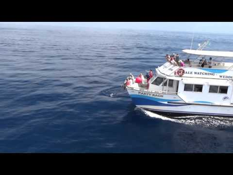 Dolphins in St Lucia with Hackshaw's Boat Charters