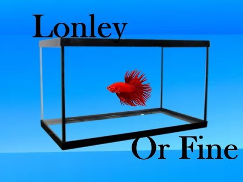 DO BETTA FISH GET LONELY 2017