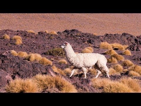 Chili Bolivia 2018-Travel video