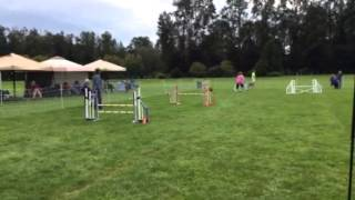 Caylee Jww Run At Cascade Dachshund Trial 9/19/15