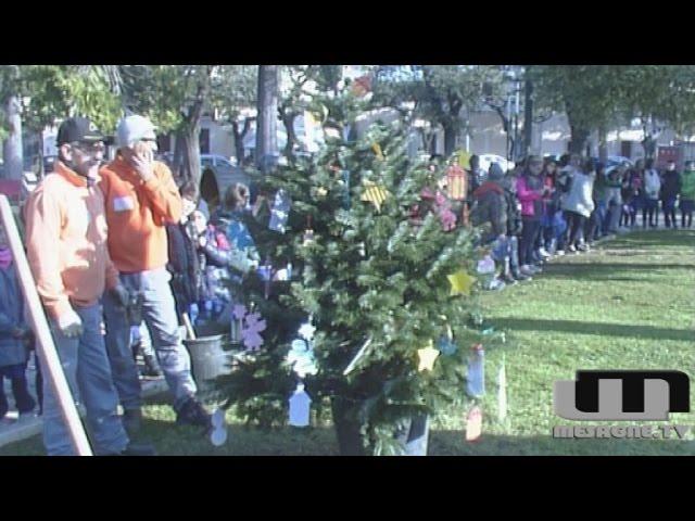 Un albero donato alla città