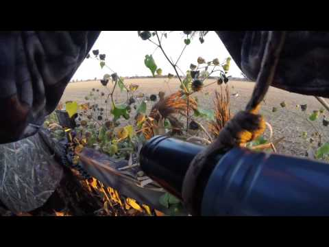 Southwestern Ontario Goose Hunt