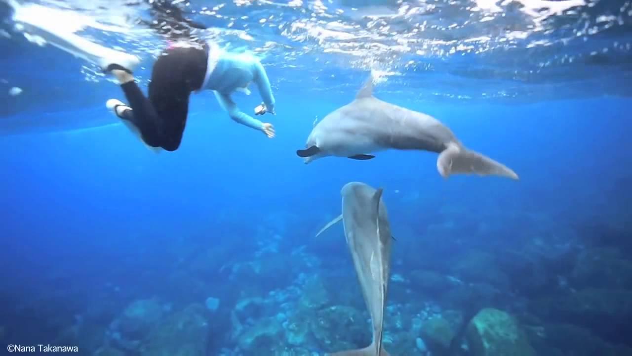Дельфины в океане веб камера