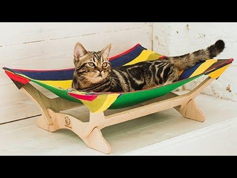Вопрос: Нужна ли домашним кошкам и собакам индивидуальная мебель, почему?