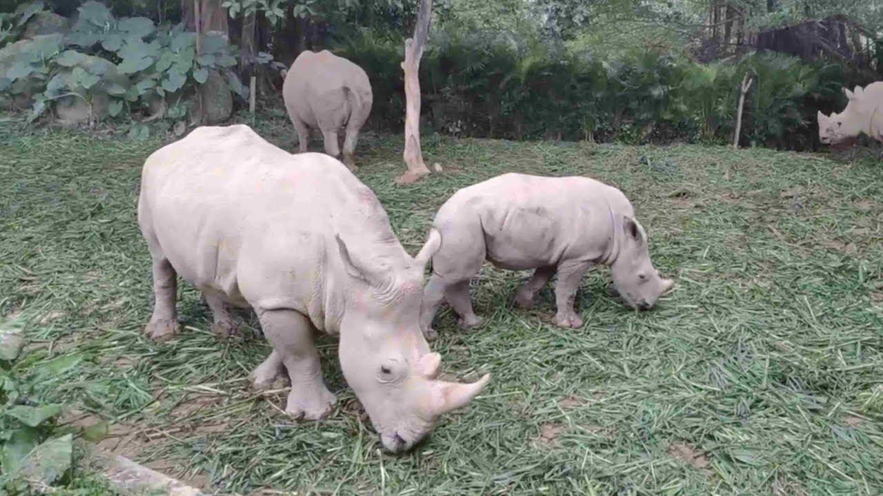 Image result for rhinoceros little prince