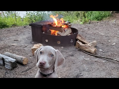 Walk in the woods with my guy Camper the Dog and an update ...