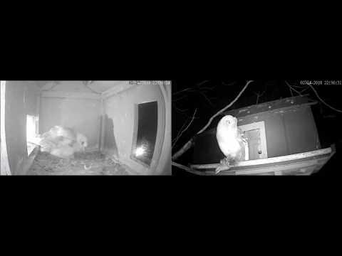 Feb 24 2018 10:36PM Jasper Flies Off With Rabbit!