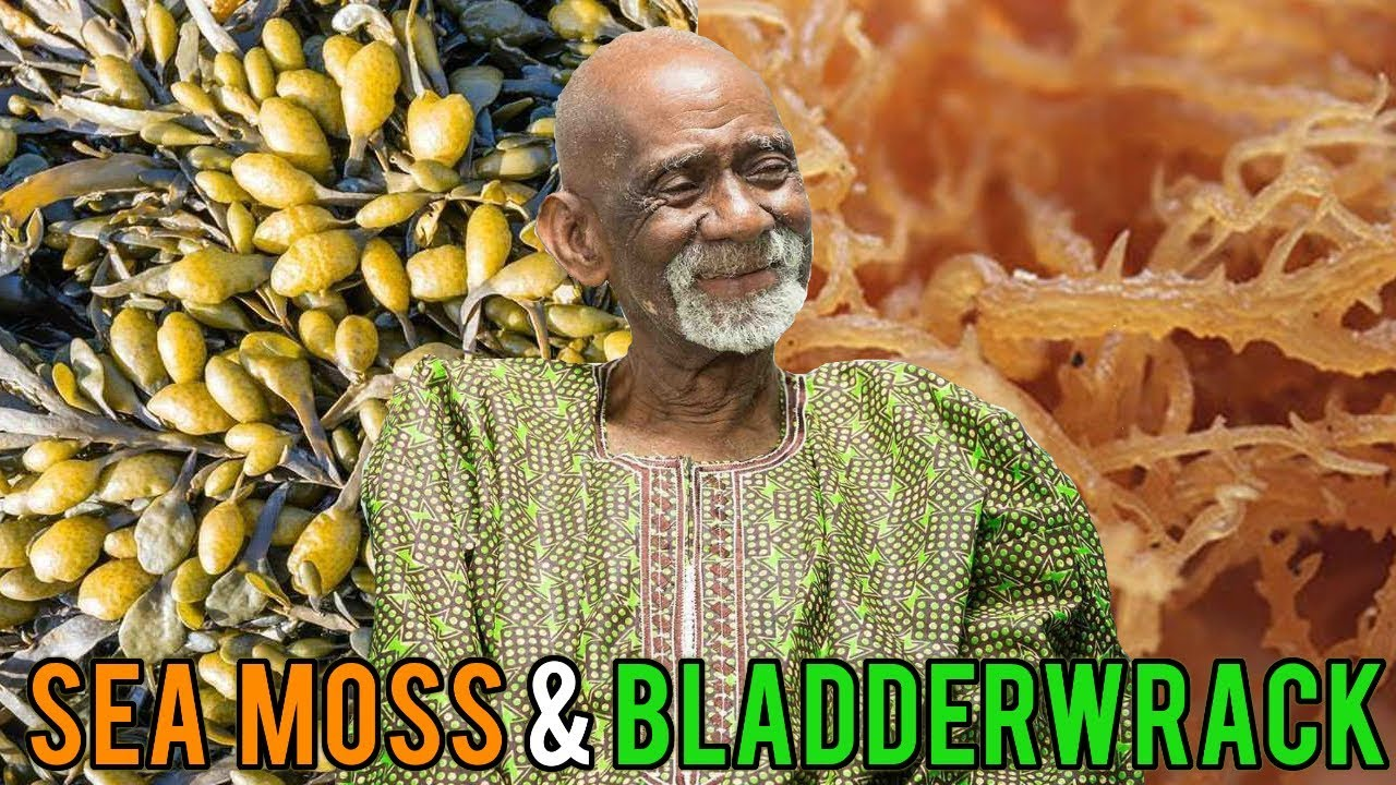 Dr Sebi Talks Sea Moss and Bladderwrack Benefits