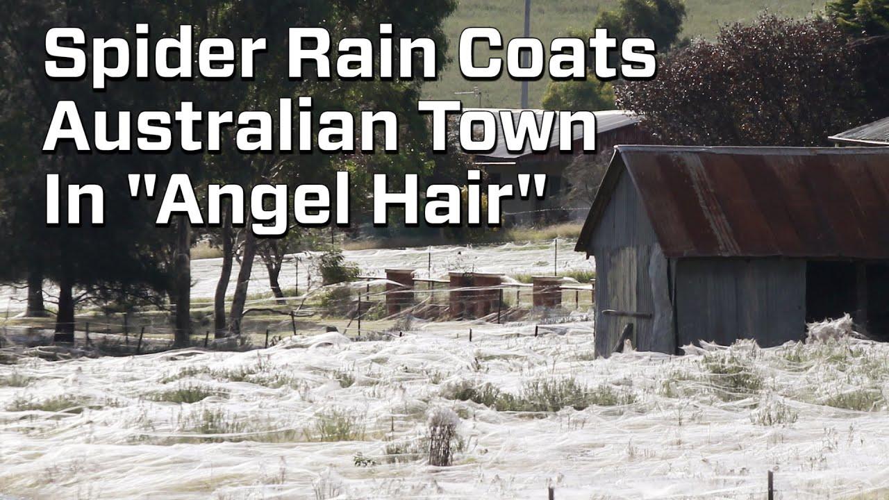 Spider Rain Coats Australian Town In Webs Youtube