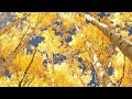 Peaceful Music Relaxing Music Instrumental Music The Golden Days Of Autumn By Tim Janis mp3