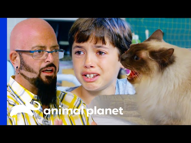 Cats' Behavior Tears Family Apart | My Cat From Hell
