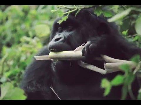 Discover Rwanda Tourism East Africa