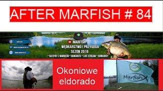 After Marfish # 84 Okoniowe eldorado, Liga Marfisha, Live czat.