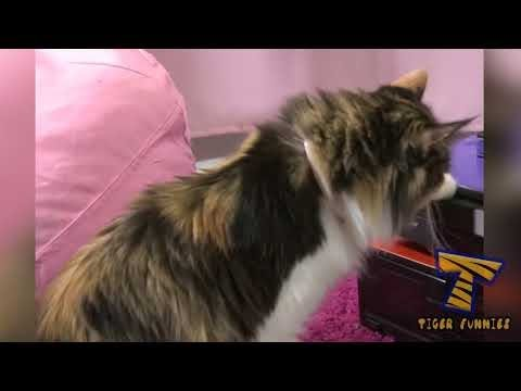 Animal Videos ✬ Crazy Cats ✬ You'll Non Stop Laugh With This Funny Cats ✬ Animals TV