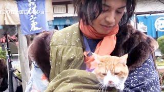 ムビコレのチャンネル登録はこちら▷▷http://goo.gl/ruQ5N7 「猫」+「時...
