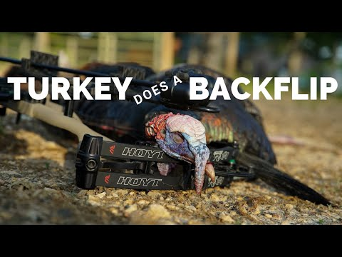 Suburban Turkey Hunt: Turkey Does BACKFLIP!!