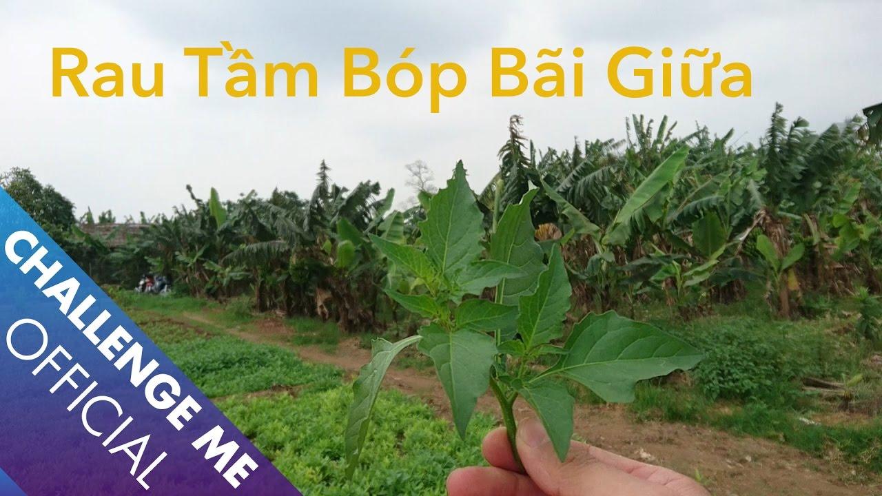 Hái Rau Tầm Bóp Miễn Phí (Hanoi Red River Bank) | Challenge Me - Hãy Thách Thức Tôi
