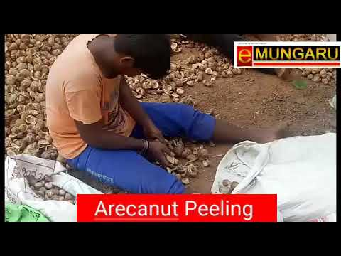 Mangaluru | Art of Arecanut peeling | Special skill in Dakshina Kannada