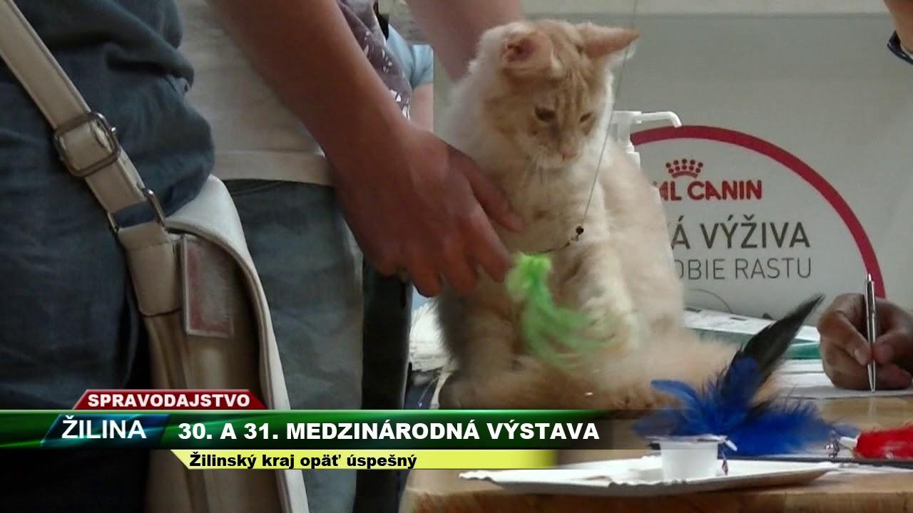 TV SEVERKA Medzinárodné výstavy mačiek 2017 - YouTube 4cb6b2b7354