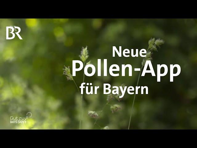 Gräser, Heuschnupfen & Co.: Hilfe für Allergiker - neue Pollen-App für Bayern   Gut zu wissen   BR