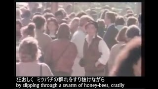 佐野元春の逸品「約束の橋 - Yakusoku no Hashi」~ 心が洗われる。 Beau...