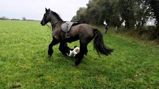 Equestrian fox hunting in Ireland with the Suir Vale Harriers Hunt Clonmore Jan 2020