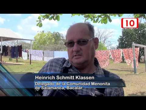 Comunidad menonita de Bacalar realiza pruebas de cultivo