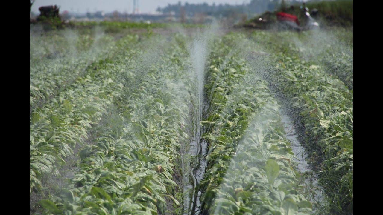 San Fu Irrigation System Installation H Y Spray Tube Youtube