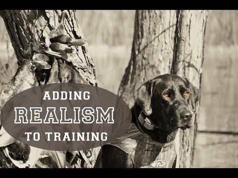 Adding Realism To Hunting Dog Training