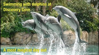 Swimming with dolphins at Discovery Cove, Florida.