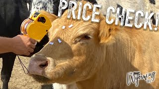 What is a Cow Worth?