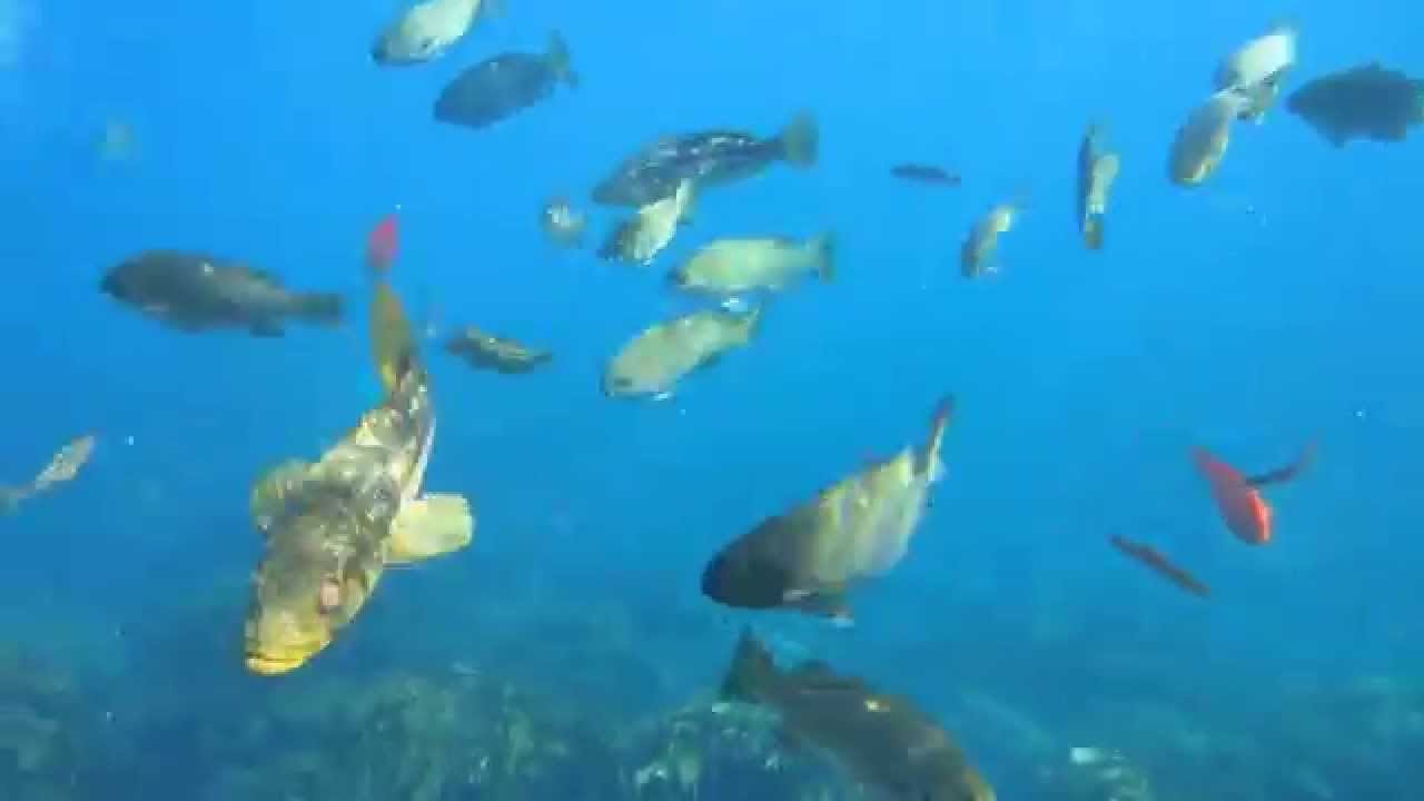 Santa catalina island snorkeling underwater video lots for Catalina island fishing report