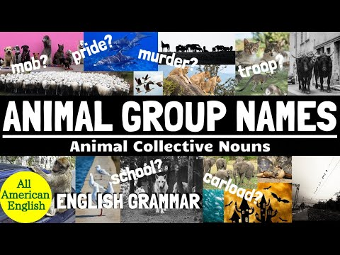 ANIMAL GROUP NAMES | Commonly Used ANIMAL COLLECTIVE NOUNS | All American English