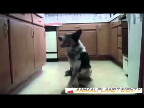 Funny and Stupid Animals 9 @ financial Funny Animal Videos Funny Pet Videos